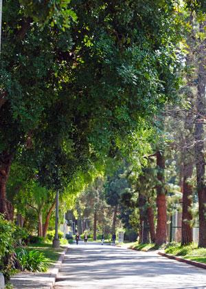Tree Walkway at LAVC