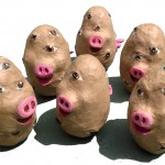 One Pigtato, two Pigtato…